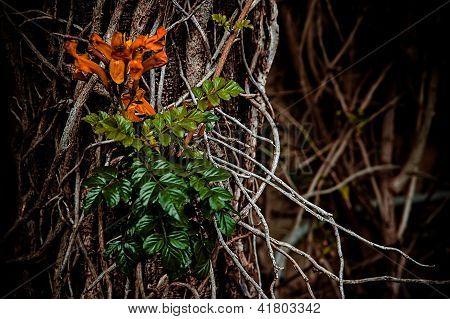 Wild Flower An Roots
