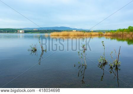 Water Plants By The Lake. Plants In The Lake, Yellow Reeds On Lake
