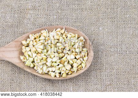 Sprouted Buckwheat Seeds In Wooden Spoon On A Linen Background. Healthy Vegan Food. Vegetarian Food.