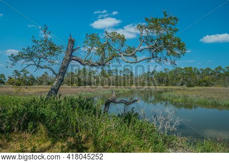 View Of The Wetlands Or Salt Marsh On The Inland Side Of Jekyll Island On The Georgia Coast On A Bri