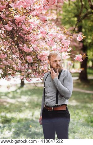 Tenderness Concept. Man With Beard On Happy Face Near Tender Pink Flowers. Hipster With Sakura Bloss