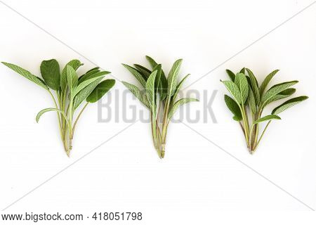 Salvia Officinalis. Leaves Isolated On White Background. Copy Space