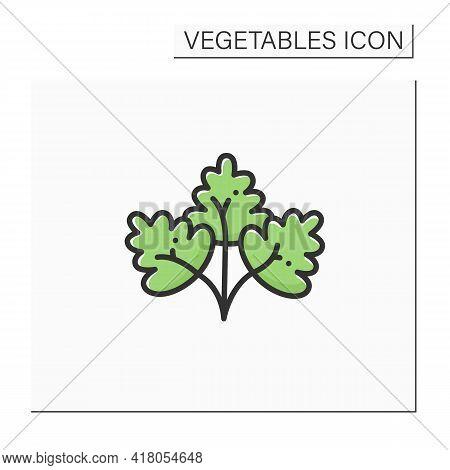 Parsley Color Icon. Fresh, Edible Flowering Plant. Flat Leaf, Root Parsley. Vegetarian, Healthy Nutr
