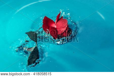 Single Red Rose In The Garden Fresh Flower Field Beautiful Red Rose Bouquet Beauty Natural Bloom Blo