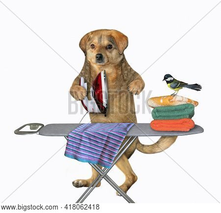 A Beige Dog Irons Clothes Using An Iron On An Ironing Board After Laundry At Home. White Background.