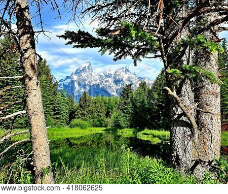 Grand Tetons, Framed By Pine Trees, Grand Teton National Park.