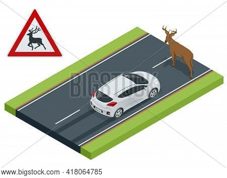 Isometric Deer Crosses The Road In Front Of The Car, Danger Of Collision, Wild Animals On The Road,