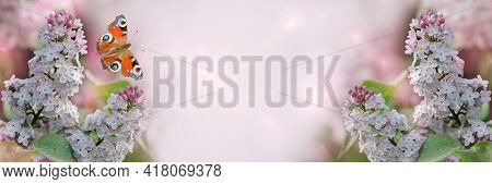 Unfocused, Widescreen Spring Background With Blooming Lilacs And A Beautiful Butterfly. Blooming Spr