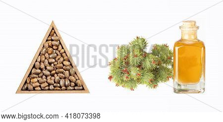 Seeds And Castor Oil - Ricinus Communis. Triangular Bowl