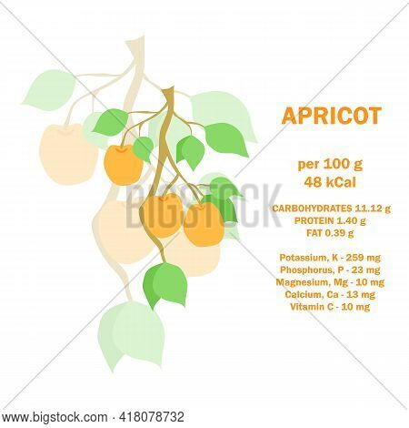 Infographic Card About Calories Of Apricot 100g. Vitamins, Minerals And Calorie Content. Flat Health