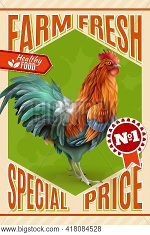 Healthy Organic Poultry Meat Sale And Roosters For Breeding  Farm Market Price Offer Classic Vintage