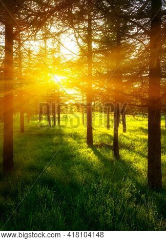 Beautiful Sunlight in spring forest , The Nature Of Israel