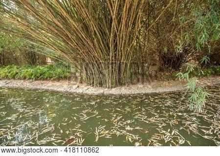 Bamboo Plantation, Green Bamboo Garden Nature Background