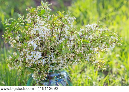 Bouquet Of Delicate White Cherry Blossoms In A Glass Jar With Water In The Village Garden. Cherry Bl