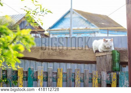 Cat White Color On An Old Wooden Fence. Rural Landscape