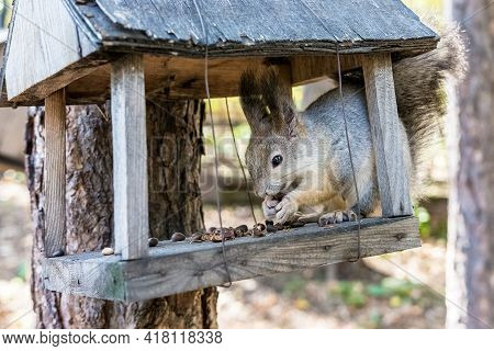 Help for wild animals. The squirrel sits in the feeder and nibbles nuts.
