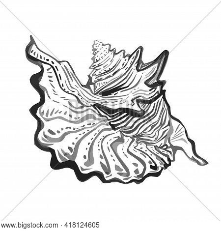 Sea Shell Hand Drawn Doodle Outline Sketch In Gray Black Halftones. Amazing Inhabitant Of The Seabed