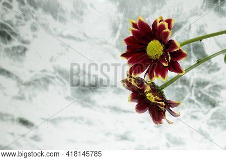 Very  Nice Garden Flower And Interesting Background