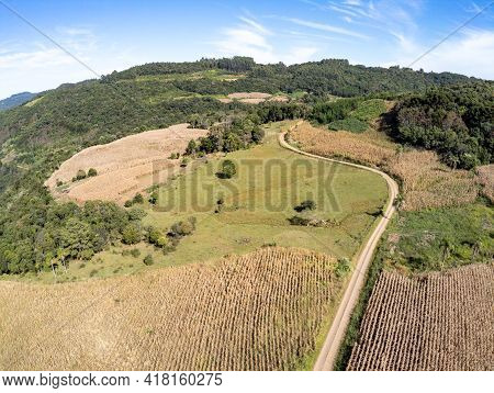 Aerial View Of A Corn Plantation, Fields And Forest