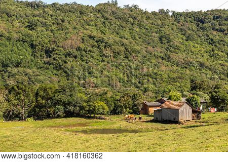 Farm House With Cows, Fields, Forest And Mountains, Santa Maria Do Herval, Rio Grande Do Sul, Brazil