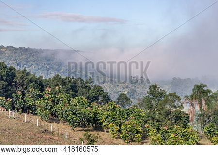 Farm Field With Fog And Forest, Ivoti, Rio Grade Do Sul, Brazil
