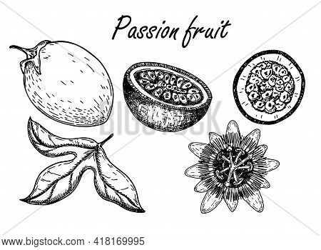 Passion Fruit Vector Drawing Set. Sketch Passionfruit With Slices. Hand Drawn Tropical Food Illustra