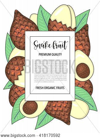 Snake Fruit, Whole And Pieces. Vector Stock Illustration Isolated On White Background. Card Design W