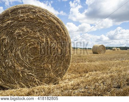 Haystacks On The Field, Close-up View. Bright Yellow And Golden Haystacks On Agricultural Field In S