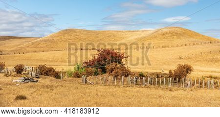 New Zealand Summers Dry Up The Farming Hill Making Them Look Very Golden Look.