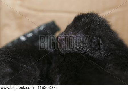 Black Newborn Kitten With Closed Eyes Sleep On Another Kitten
