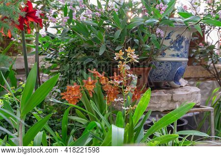 Blooming Plants In The Winter Garden. Home Floriculture, Plant Growing, Urban Jungle, Quarantine Hob