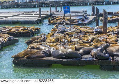 San Francisco,usa - April 18,2018 : Crowded Of Seal (sea Lions) At The Pier 39 Of San Francisco,ca O