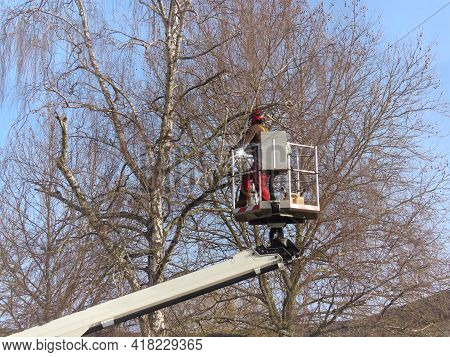Worker Cutting Leafless Birch Tree Branches From Lifting Platform In Early Spring. Walferdange, Luxe