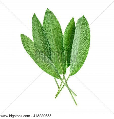 Sage Leaves Isolated On A White Background