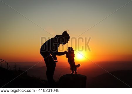 Confidence Between A Dog And A Woman At Sunset. Biewer Terrier Dog Stands On Its Back On A Tree Stum