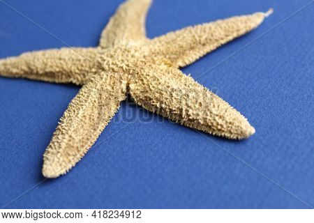 Dry Starfish Close-up On Blue Paper Background, Soft Focus
