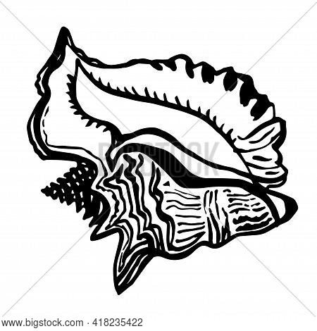 Ocean Fauna Shell Seashell In Live Line Style Of Hand Drawn Black Ink. Doodle Sketch Design Element