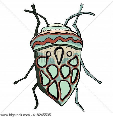 Insect Vector Illustration. African Bug Picasso. Hand Drawn Illustration.