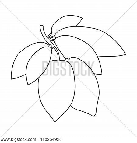 Cocoa Bean Vector Outline Icon. Vector Illustration Cacao On White Background. Isolated Outline Illu