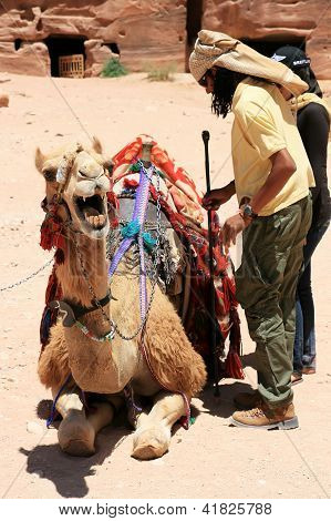 Camel And Cameleer