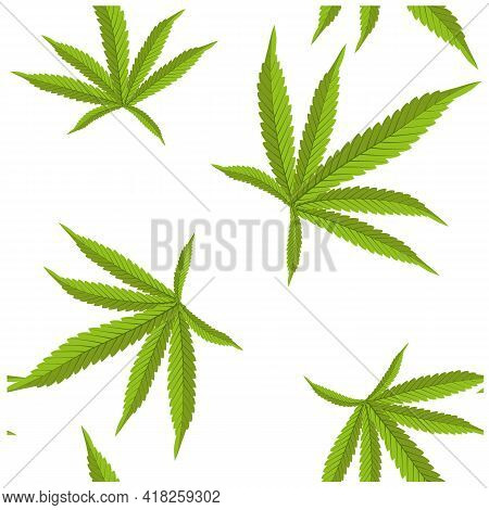 Beautiful Realistic Closeup Of Green Cannabis On Colorful Background For Wallpaper Design. Botanical