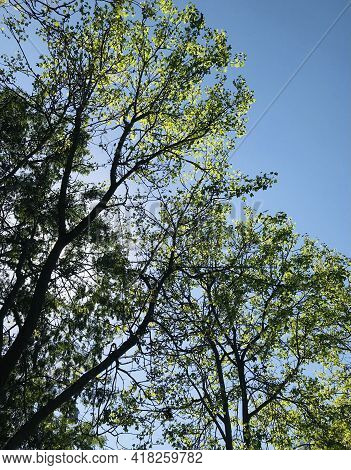 Tree Tops Against Blue Sky, Woods Background With Green Woods, Woods Nature, Tree Landscape Scene