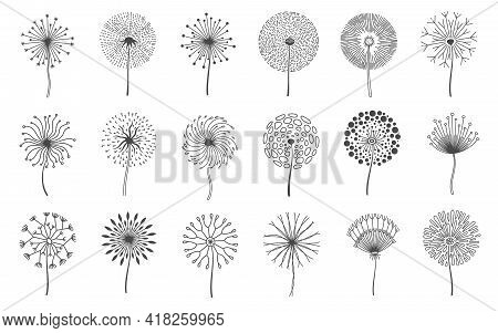 Dandelion Flowers. Fluffy Meadow Flower With Seeds. Summer Natural Floral Fluff Silhouette. Line Blo