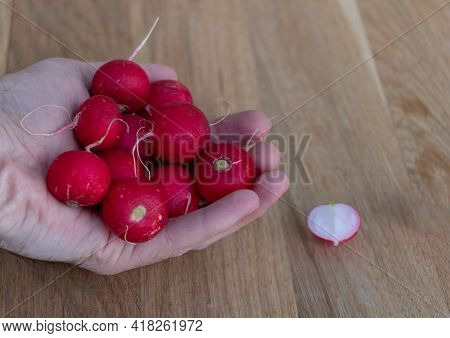 Red Radishes In The Hand Of A Man. Benefits Of Red Radish Concept. Wooden Background