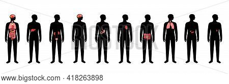 Internal Organs In Man Body. Brain, Stomach, Heart, Kidney, And Other Organs Medical Icon In Male Si
