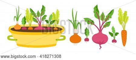Vegetablesin In Pot Flat Cartoon Set. Root Vegetable Carrots. Beets, Radishes And Cucumber. Onions G