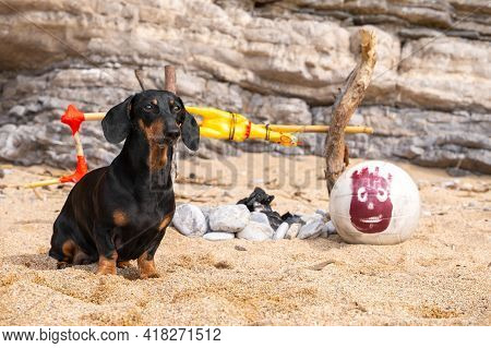 Cute Dachshund Dog Has Been Stranded On Deserted Island And Is Now Trying To Survive In Harsh Condit