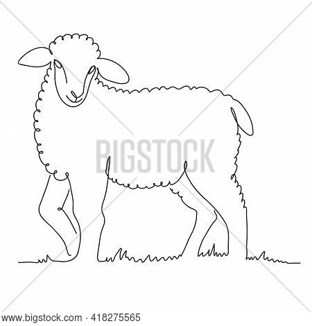 Sheep Breeding. A Young Lamb Grazes In The Meadow. Vector Illustration Isolated On White Background