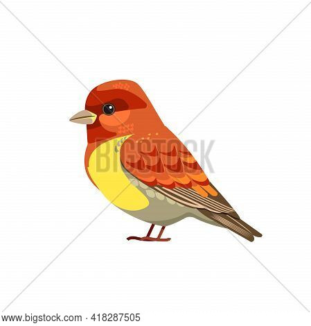 The House Finch Is A Bird In The Finch Family Fringillidae. Cartoon Flat Beautiful Character Of Orni