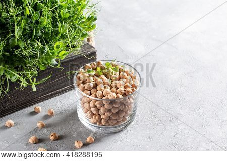 Chickpeas Sprouts And Dry Chickpeas On A Light Background. Healthy Organic Food Grown At Home. Home